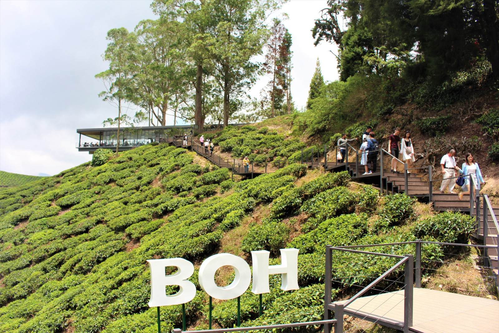 Malaysia Cameron Highland Retreat Trip (IX) – BOH Sungai Palas Tea Centre – Aroma Asian